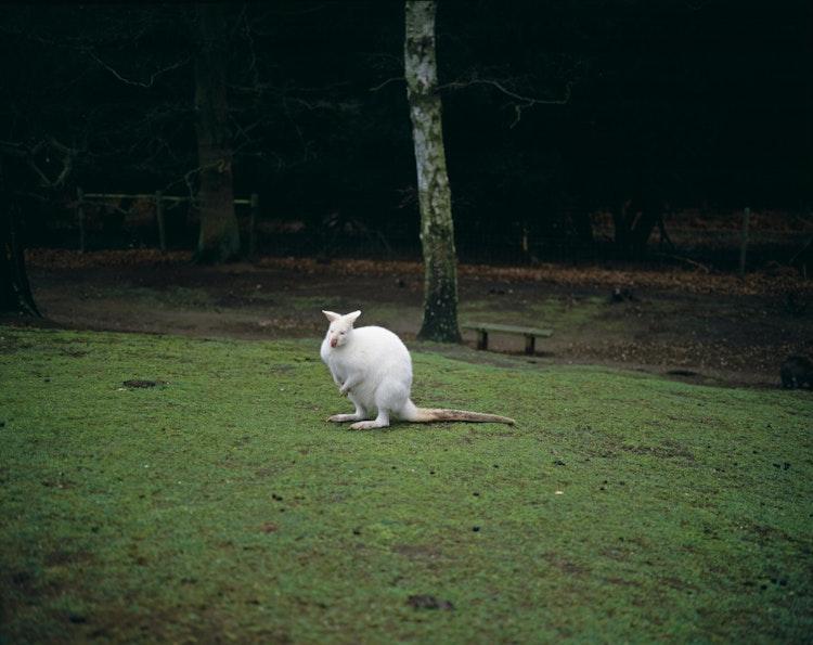 Albino, 2003