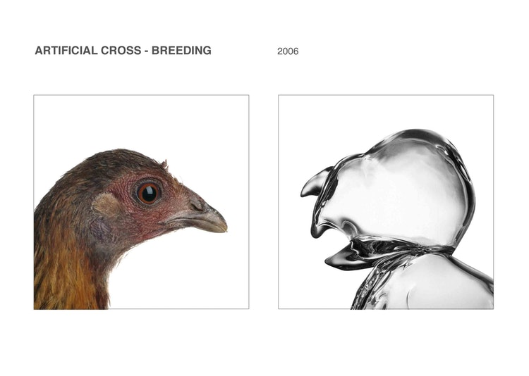 Artificial cross-breeding