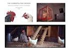 The Cosmopolitan Chicken (Mechelse Koekoek x Poulet De Bresse)
