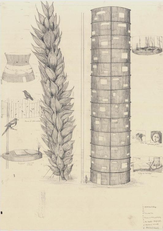 Toren (tarwe)