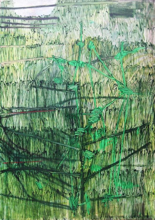 Jenkins' Grass