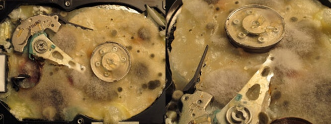 Detail of biologically infected hard drive © Angelo Vermeulen