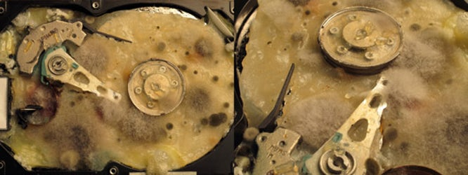 Detail of biologically infected hard drive