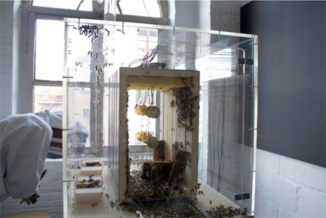 Annemie Maes - Transparant beehive (the laboratory)