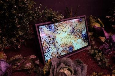 Annemie Maes - The Invisible Garden (installation)