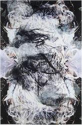 Hedwig Brouckaert - Bilateria – G, IHT, SM, NY
