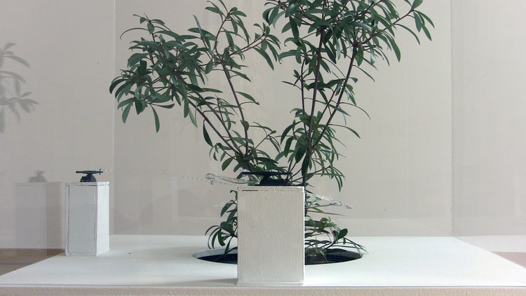 Christoph De Boeck - Plant Condition