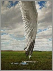 L'aile-déclinée