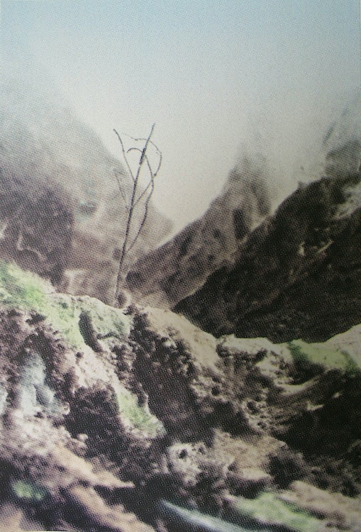 mountain and tree 2012