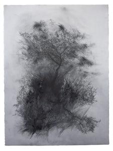 Joris Vanpoucke Birch Forest